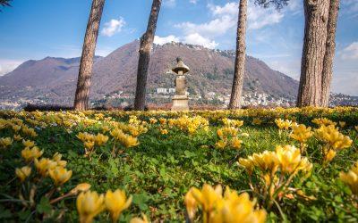 Como Villa del Grumello fioritura dei Crocus ©AndreaButti